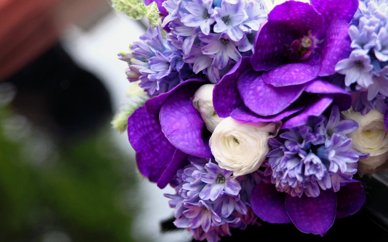 Фото красивых цветов сиреневого цвета